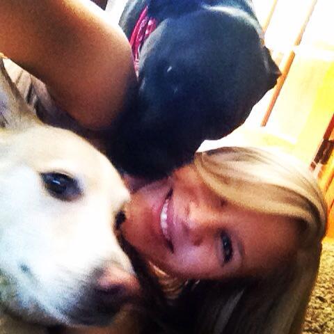 husky and pitbull